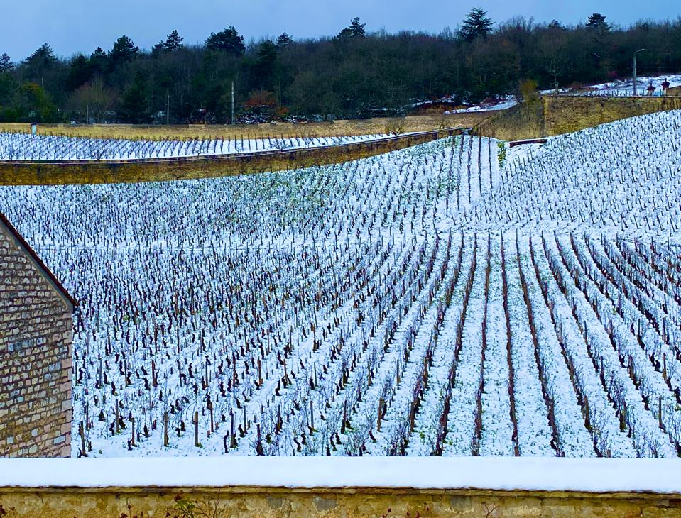 Snow covered vines in Burgundy, France
