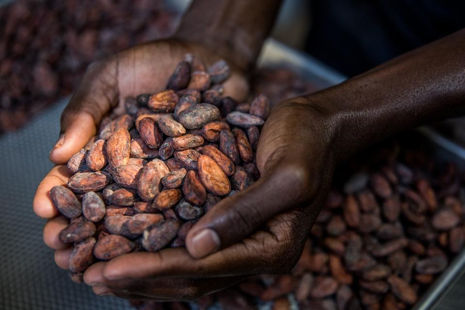 HAITI-AGRICULTURE-COCOA-CHOCOLATE