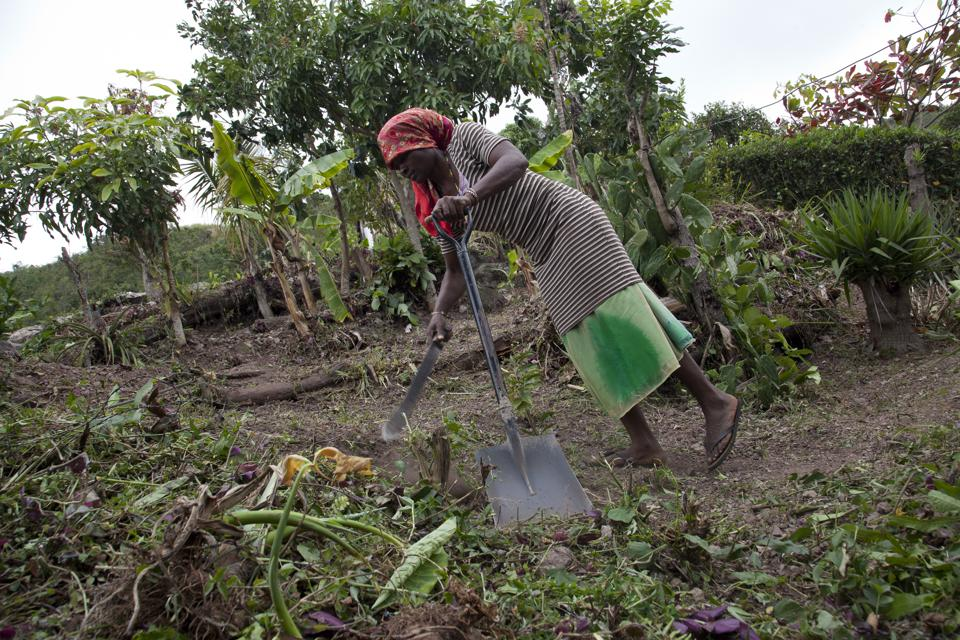 The farmer Buy Back program has played a major role in addressing growing food security
