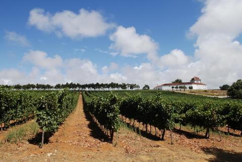 Villa Oeiras Vineyards