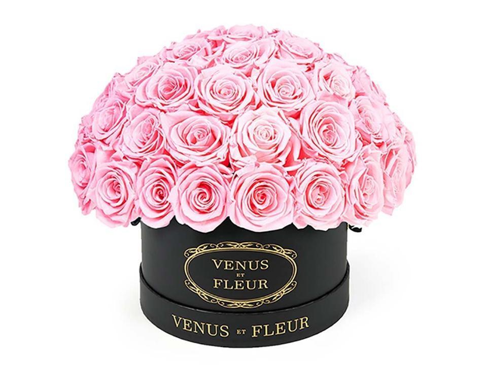 Venus et Fleur Small Le Plain