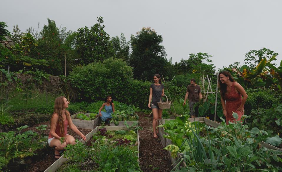 The Mana Botanics team works in their regenerative garden in Hawaii.