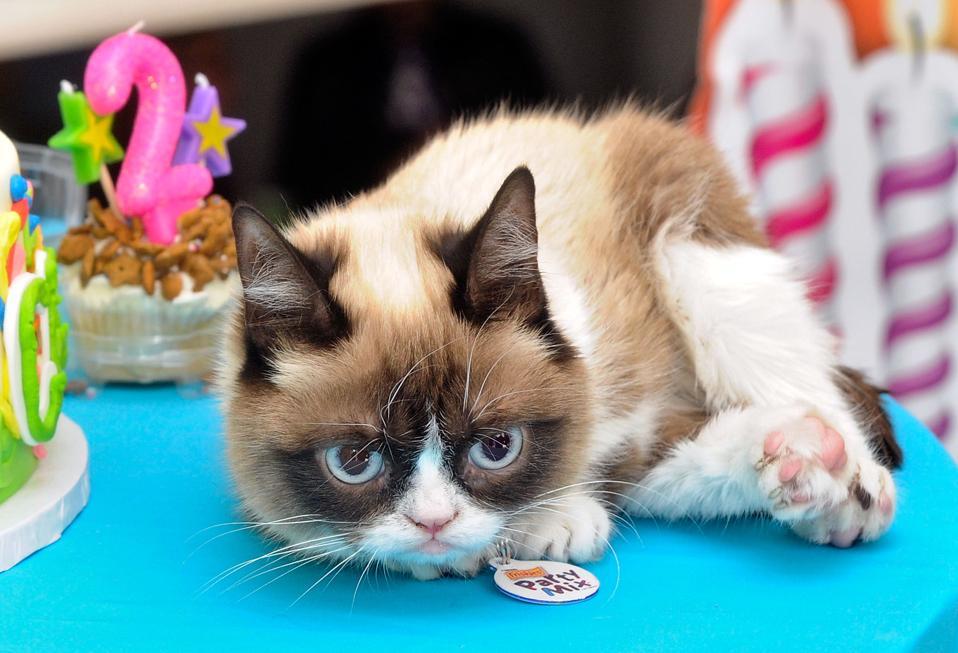 Grumpy Cat's ″Grumpiest″ Birthday Bash