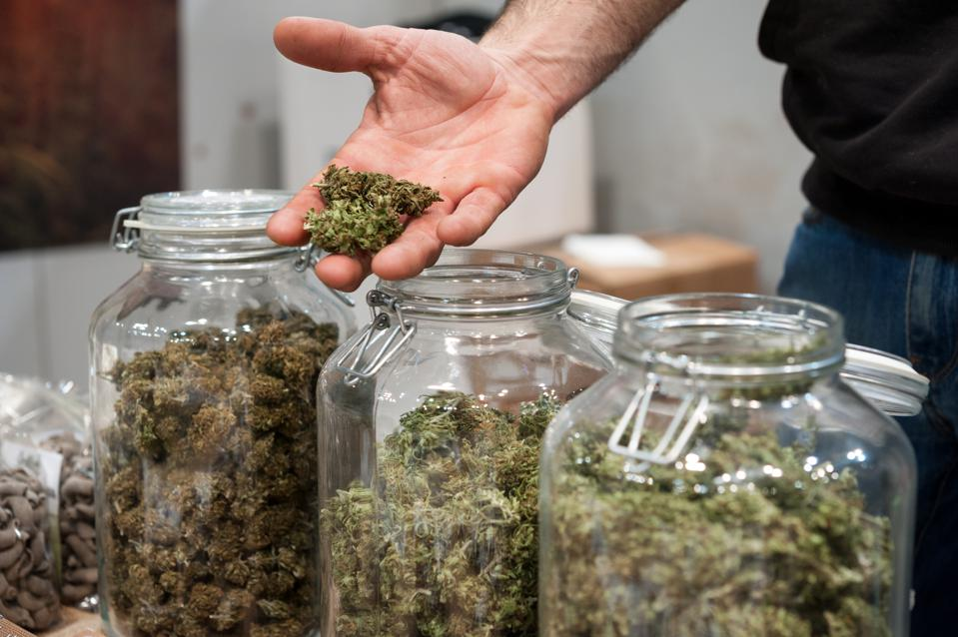 Glass jar full of Cannabis sativa.
