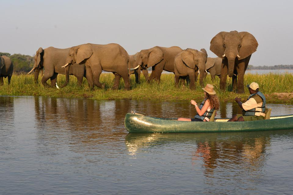 A couple in a canoe several feet from a herd of elephant