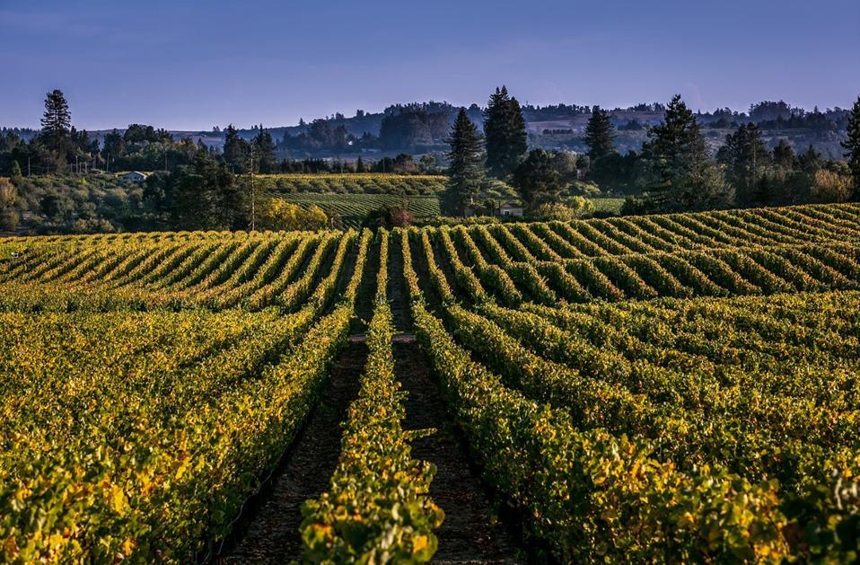 Hallberg Vineyard in Green Valley, Russian River Valley, California