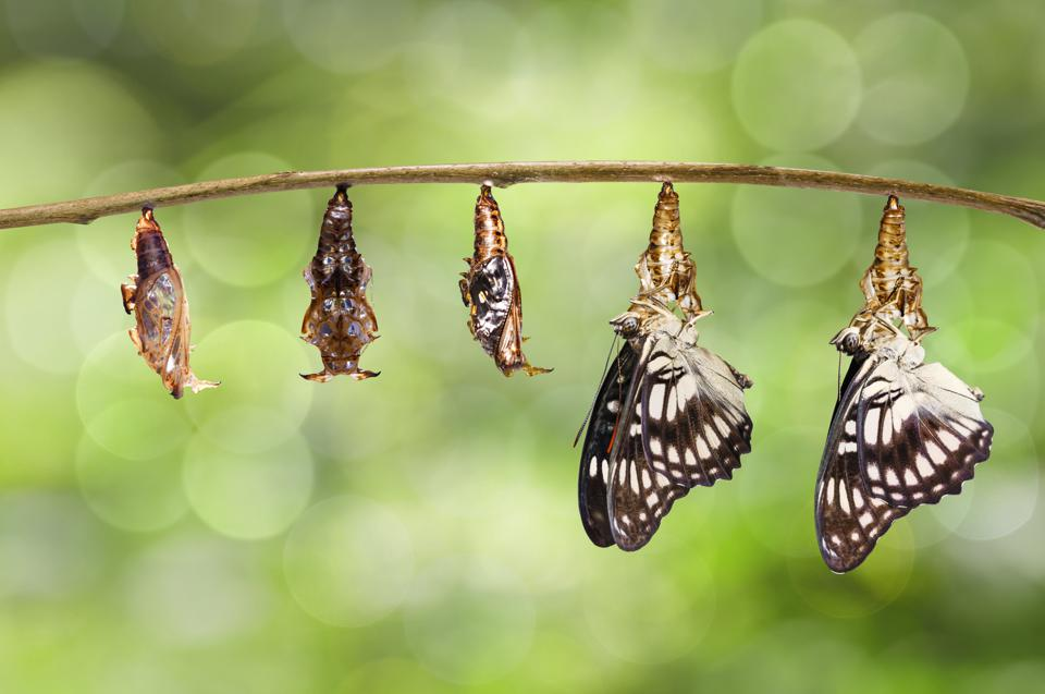 Do you want to be a butterfly enough to enter a cocoon?