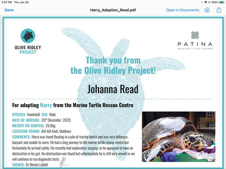 A photo of a lethargic-looking turtle in a green box with towels on an ″adoption″ certificate which describes the story of Harry, as detailed in the text of this article.