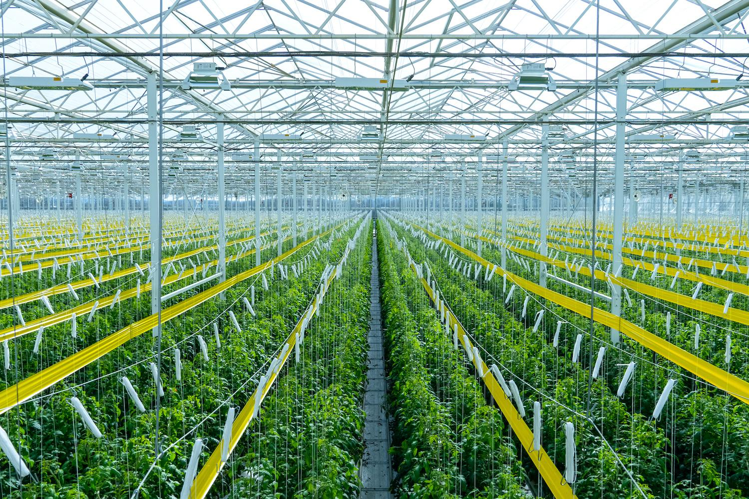 AppHarvest aims to have as many as 15 greenhouses built in the next five years.