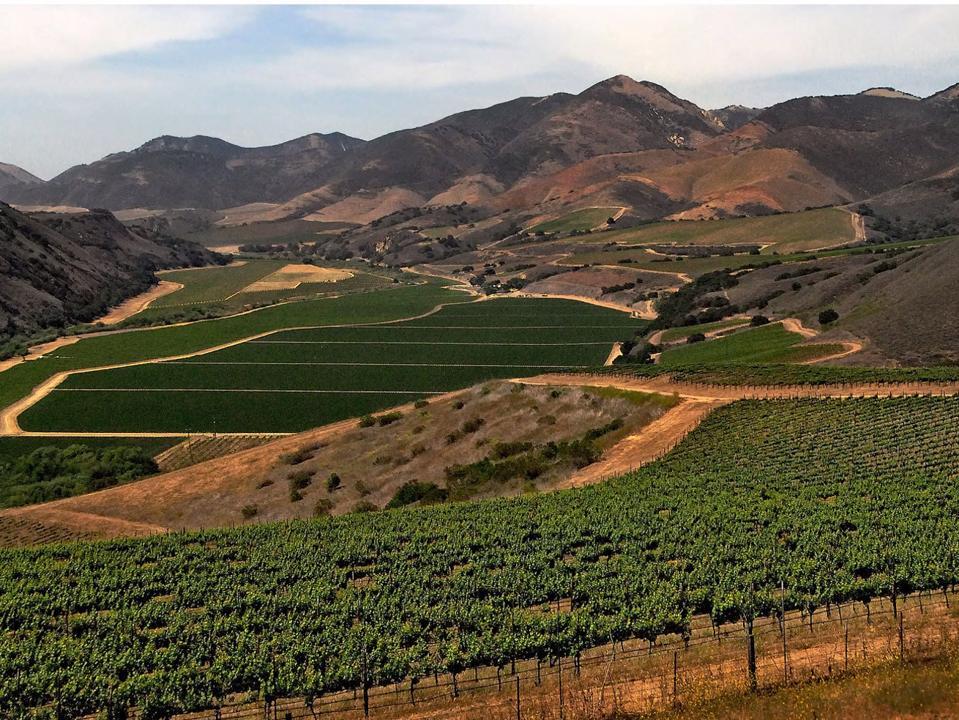 California vineyard, mountains