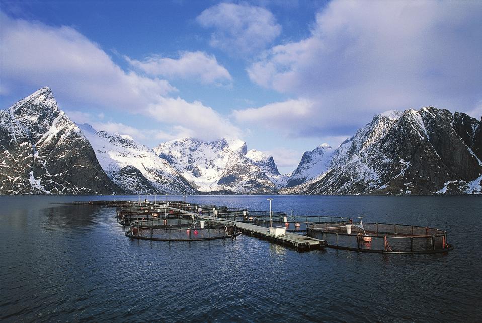 Salmon farm in Reine village, Lofoten islands