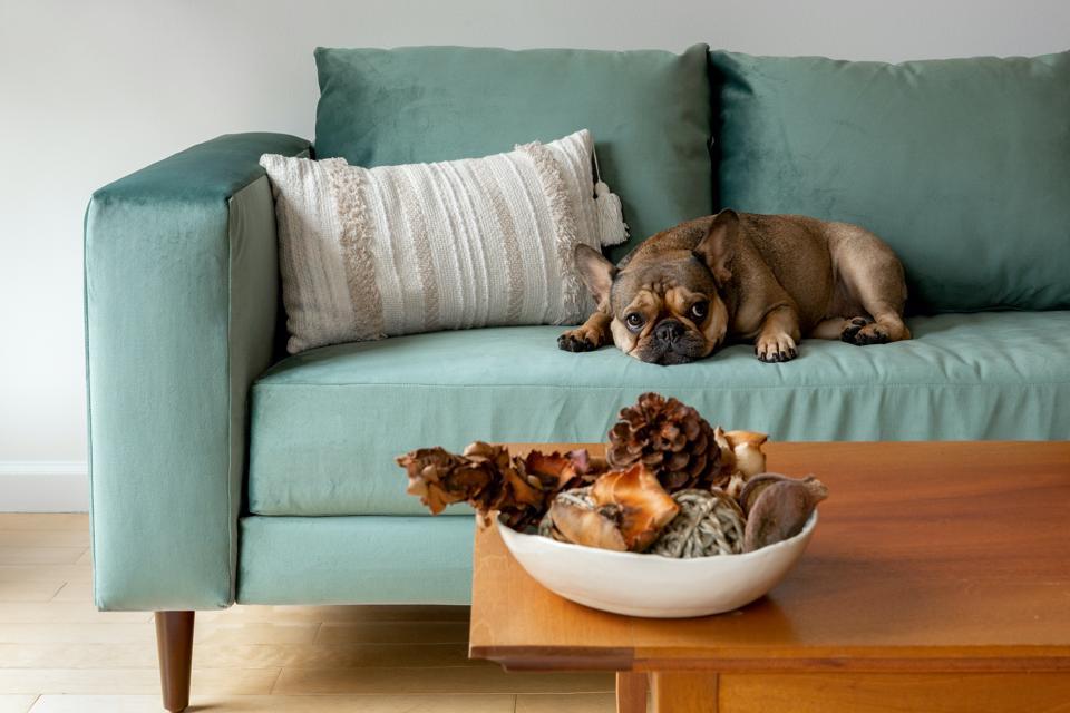 Sofa, dog, recycle