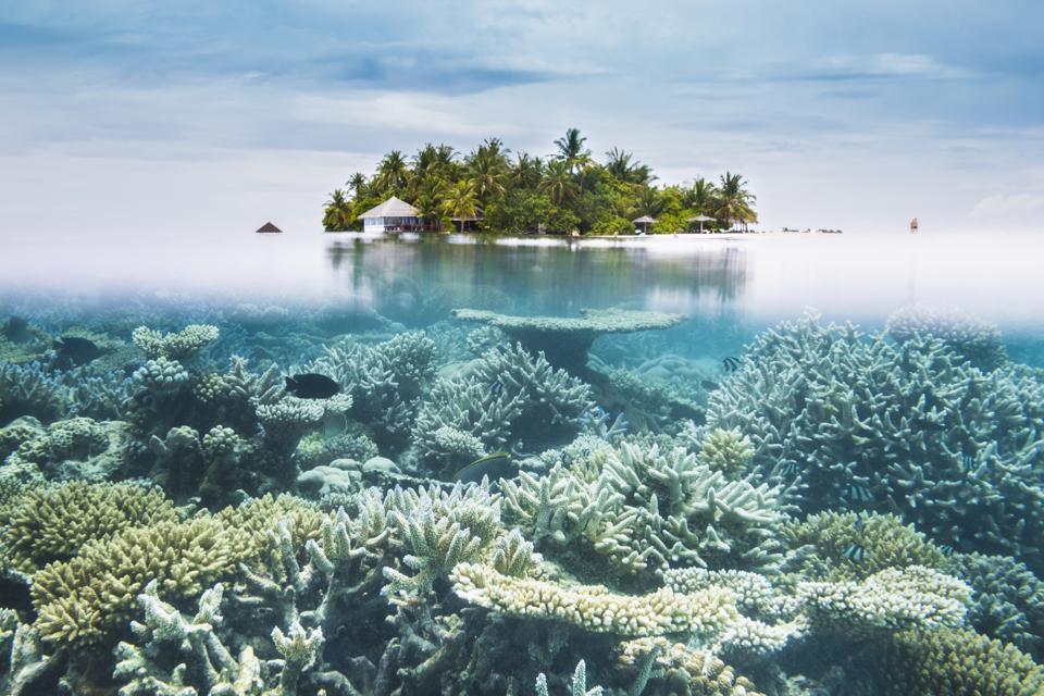Maldives halfwater