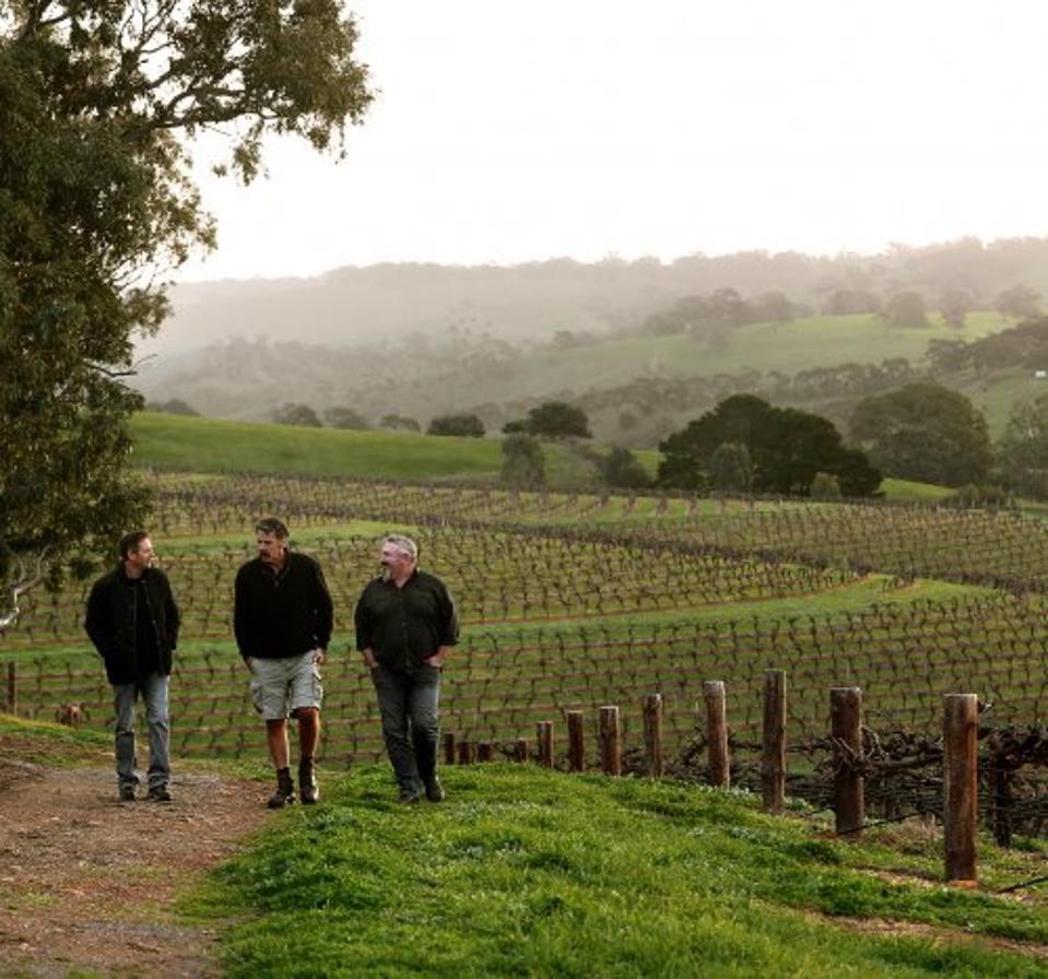 Three men walking in a green vineyard with a misty sky