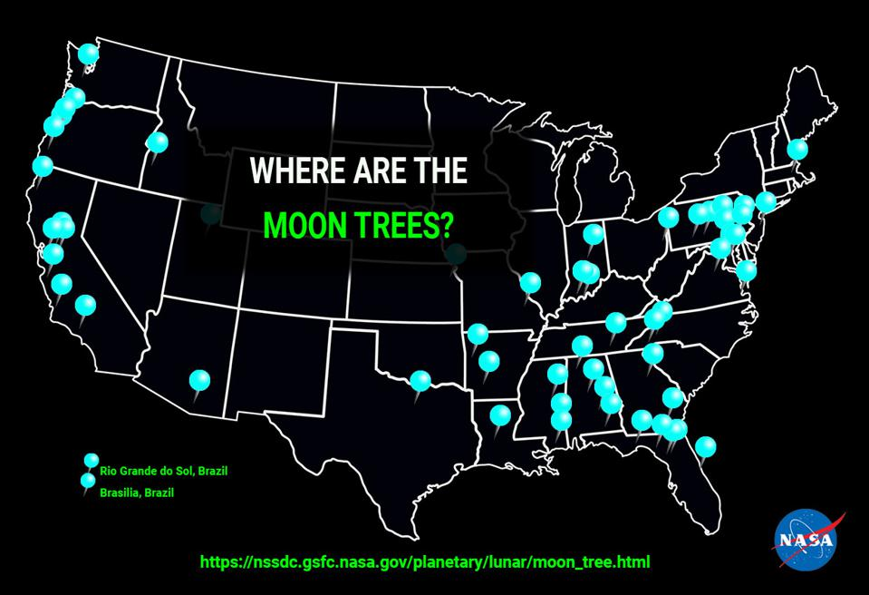 Moon Trees were planted across the U.S. and the world.