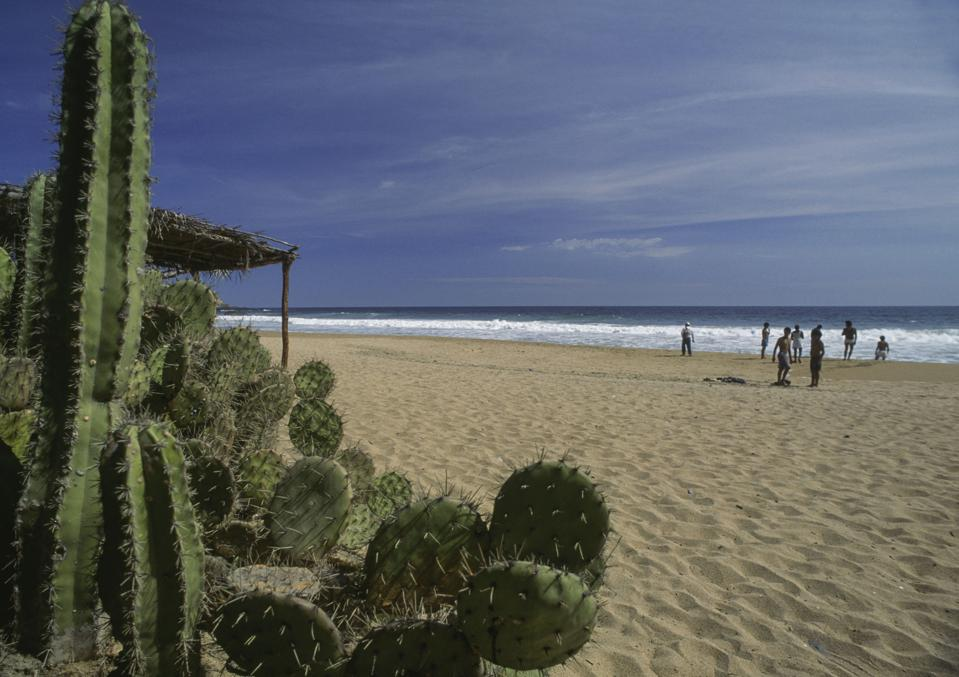 There are cactus on the beach in Playa Zipolite, near Puerto Angel, Oaxaca, Meixco