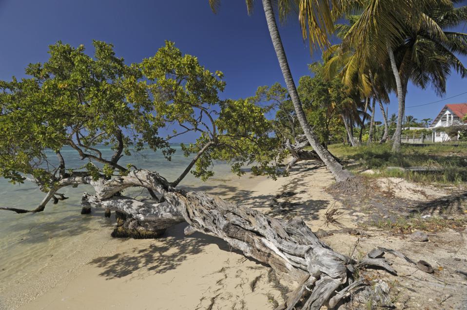 Los árboles se extienden en la playa en la playa de Punta Uva, Puerto Viejo de Talamanca en Costa Rica