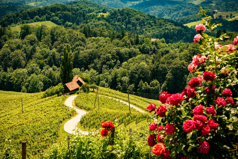 Heart shaped wine road among vineyards in Slovenia.,