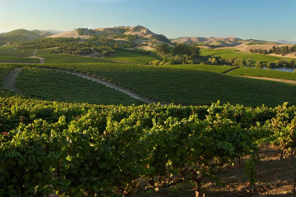 Domaine Carneros estate vineyards