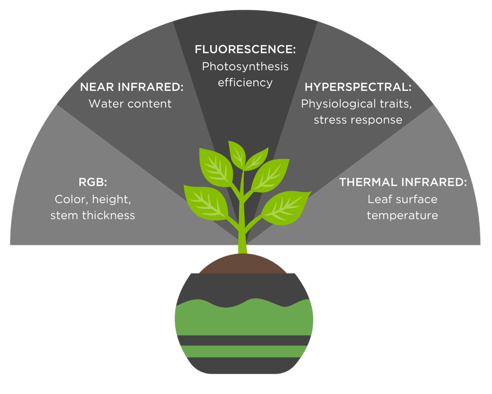 A selection of imaging sensors used in automated phenotyping, ranging from topical traits - such as leaf color and height - to physiological traits - such as photosynthetic efficiency.