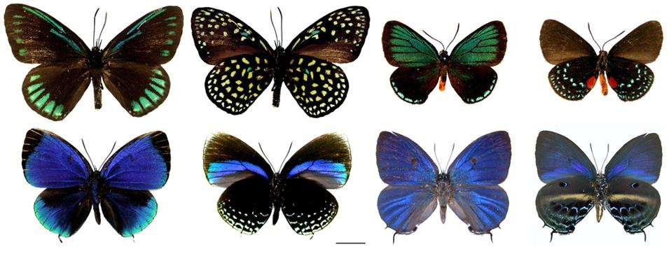 Brightly colored butterflies