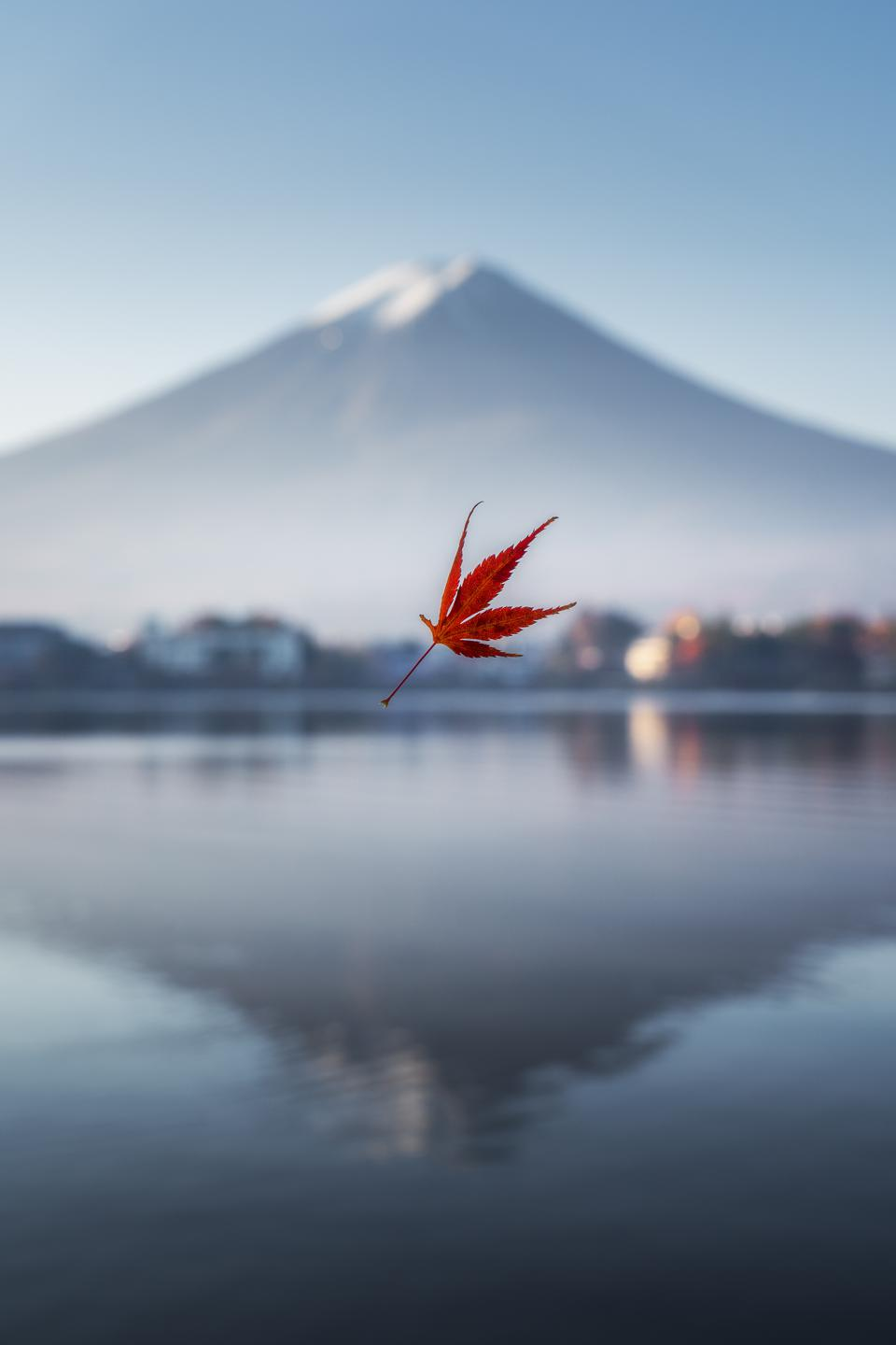 Sony World Photography Awards winning photo of red leave falling with white mountain in background.