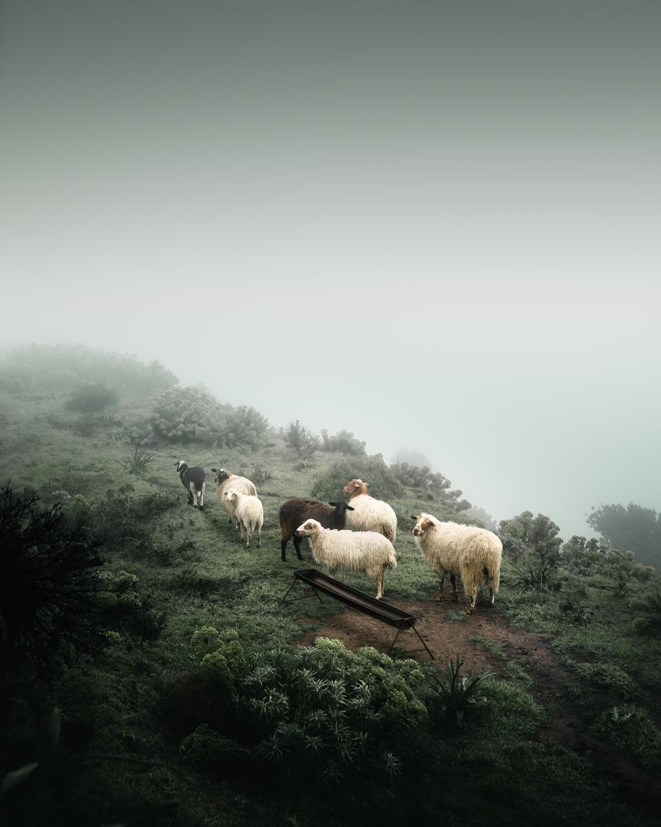 Sony World Photography Awards winning photo of sheep in foggy mountain.