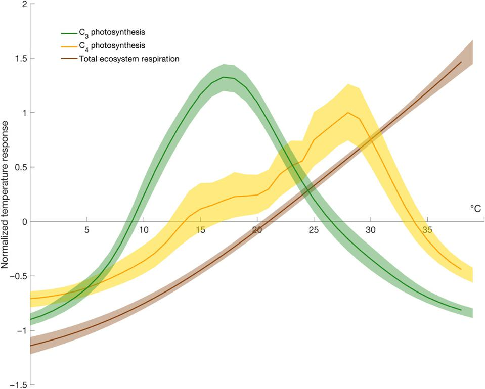 Photosynthetic curves for C3, C4 pathways, plus respiration