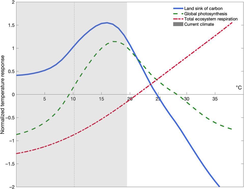 Terrestrial land sink curves
