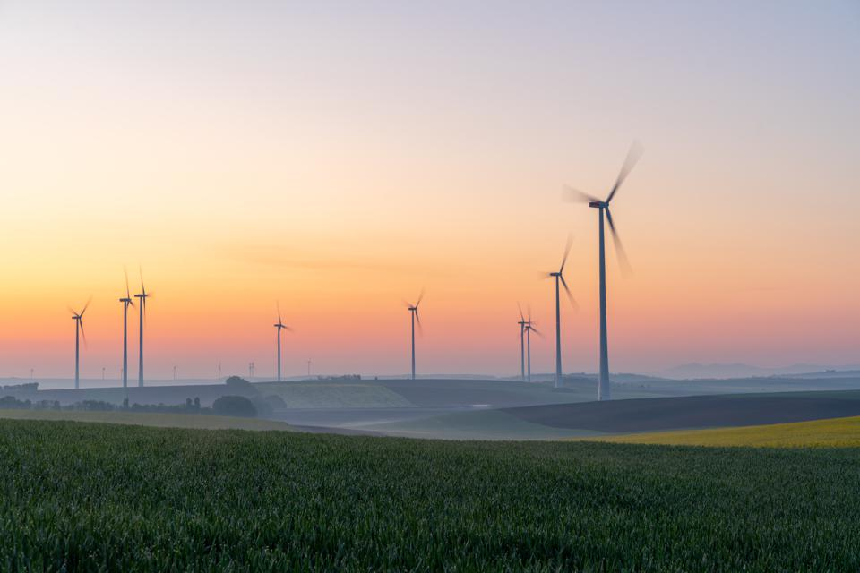 Young wheat in field and wind turbines at sunrise