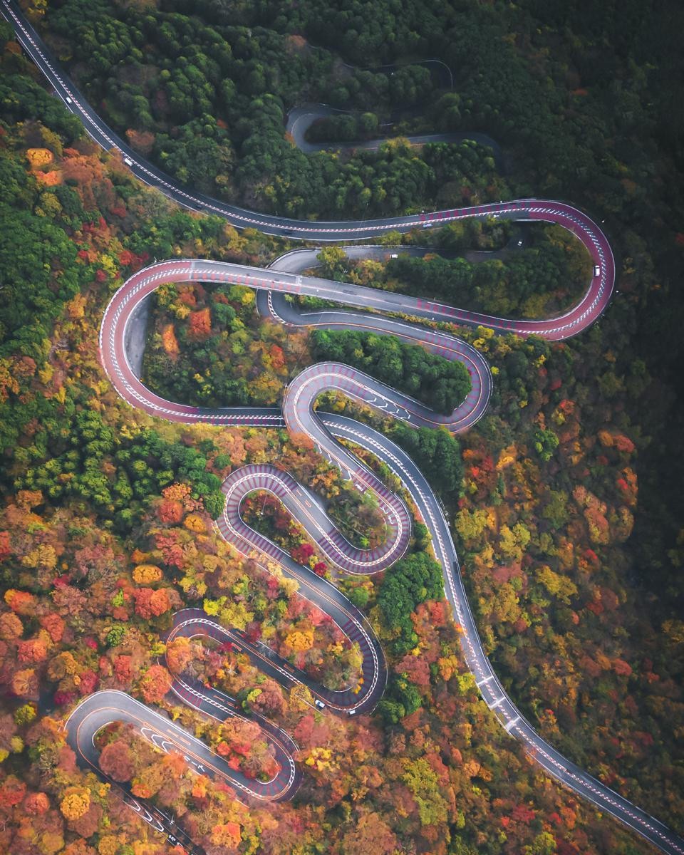 Sony World Photography Awards; A road crossing through a forest in Japan from above