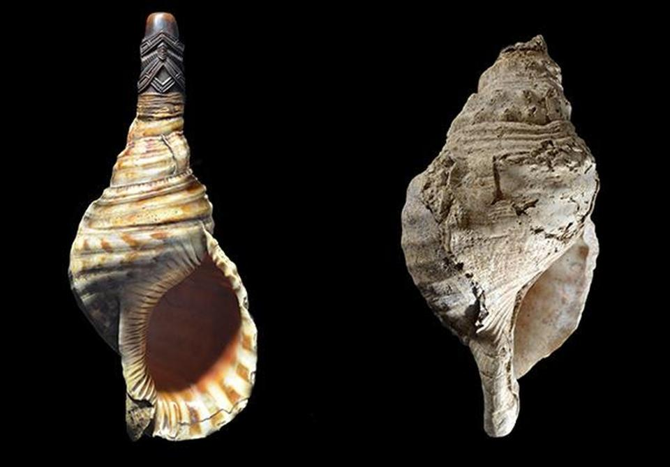The shell from the Marsoulas Cave and as hypothetical reconstruction with a mouthpiece based on modern conch instruments still used today in Southeast Asia.