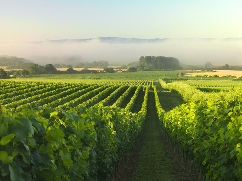 Vineyards in England - Nyetimber