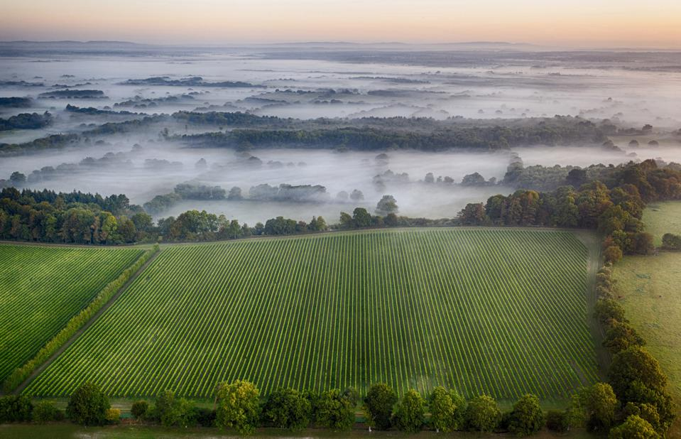 Vineyard sunrise by drone on the South Downs.