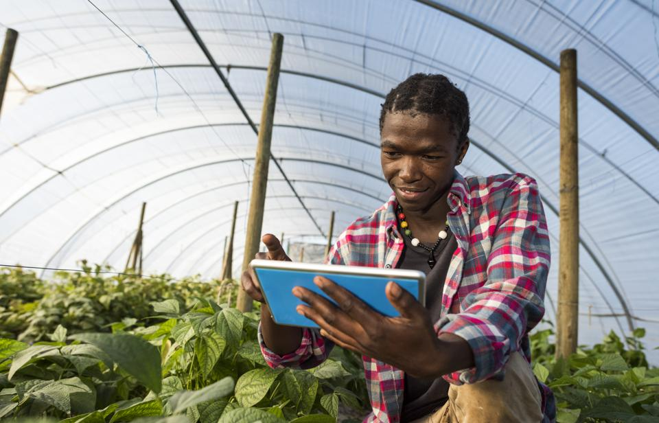 Young African man checking tablet information in greenhouse