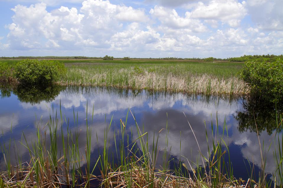 The clouds are reflected in the water at Big Cypress National Preserve in Florida