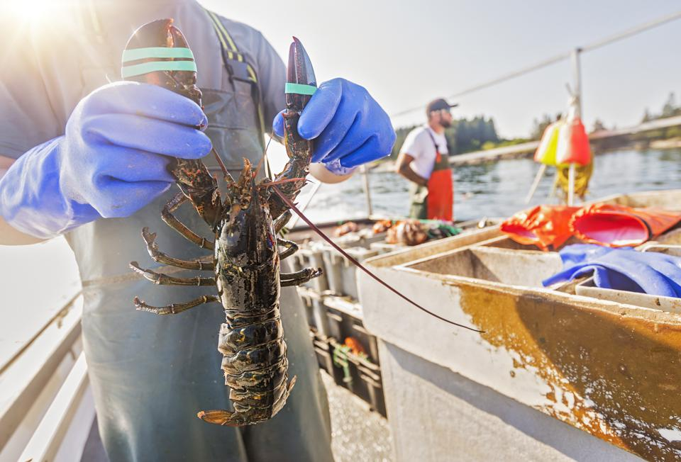 Maine Cancelled Its Summer Tourist Season—But You Can Get Fresh Lobster Delivered To Your Door