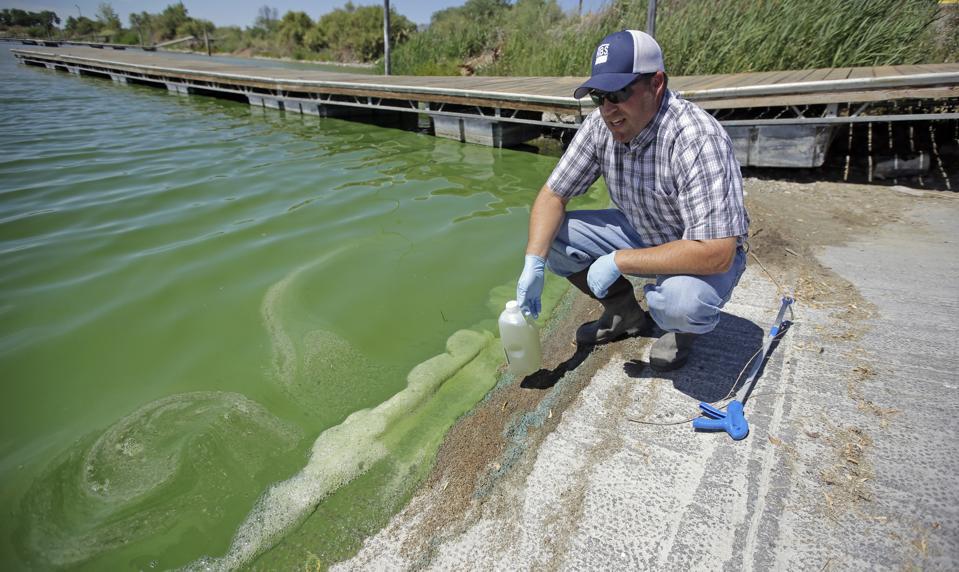 Toxic Algae Utah Lake