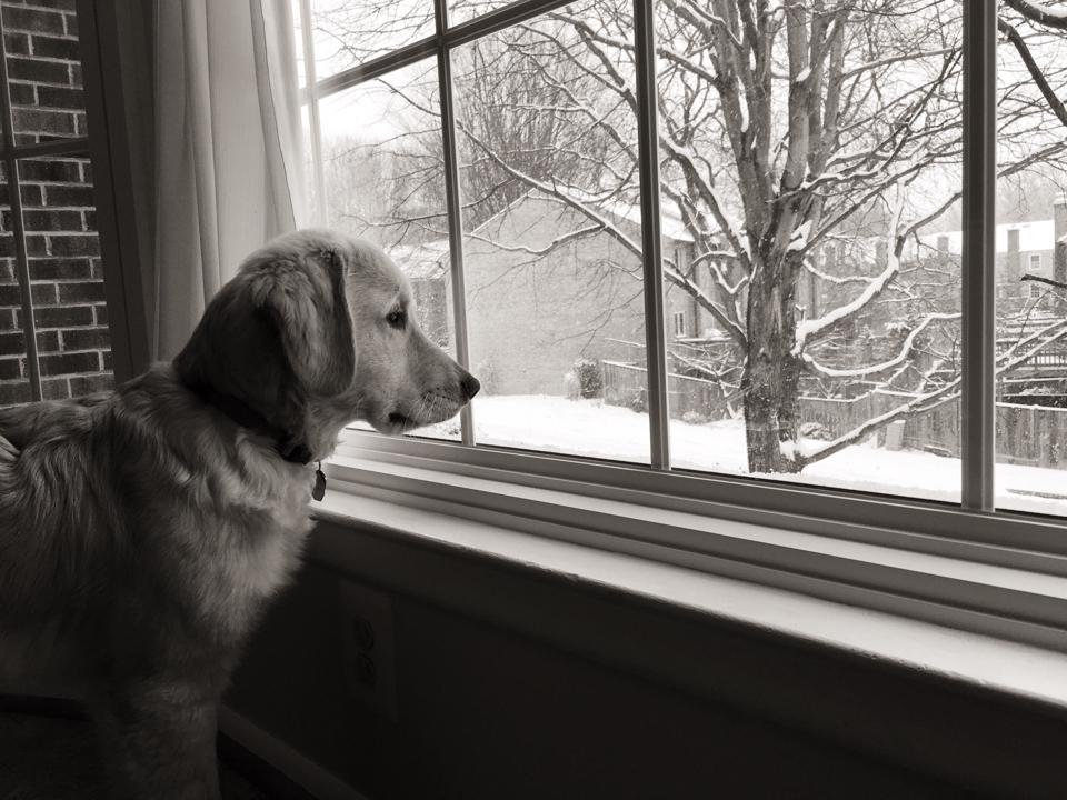 Golden Retriever Looking Through Window During Winter