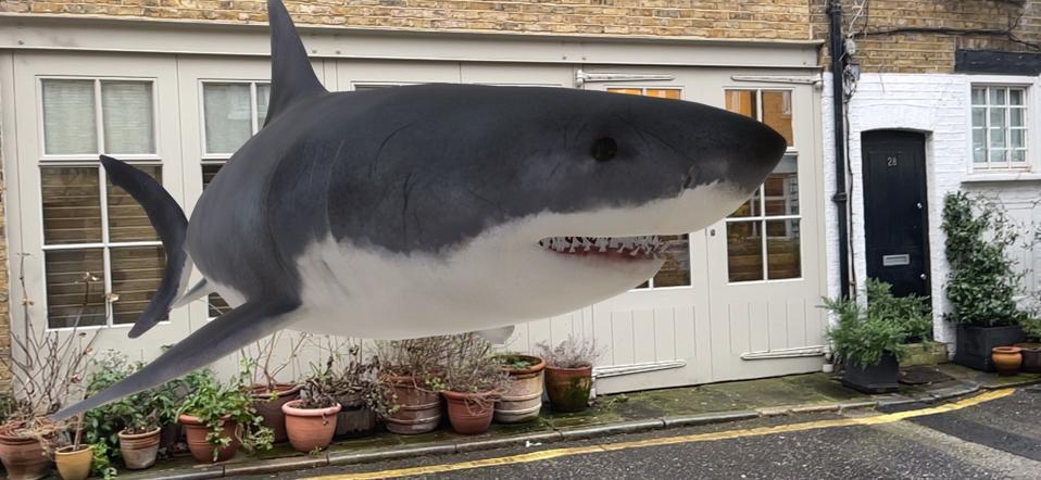 A life-size shark from Google 3D.