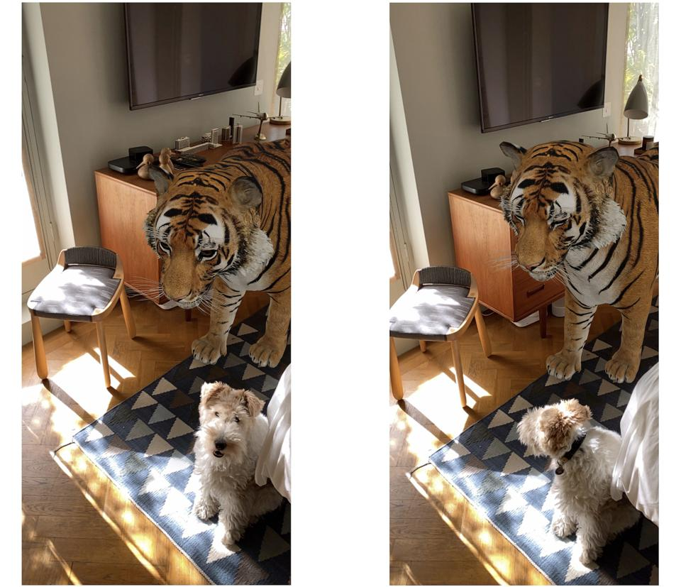 The dog is real, the tiger is not (as the dog was relieved to know).