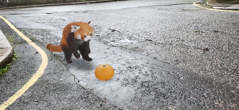 Google 3D red panda (pumpkin model's own).