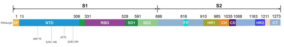 Figure 3. Linear visualization of the Pittsburgh patient's spike protein genome.