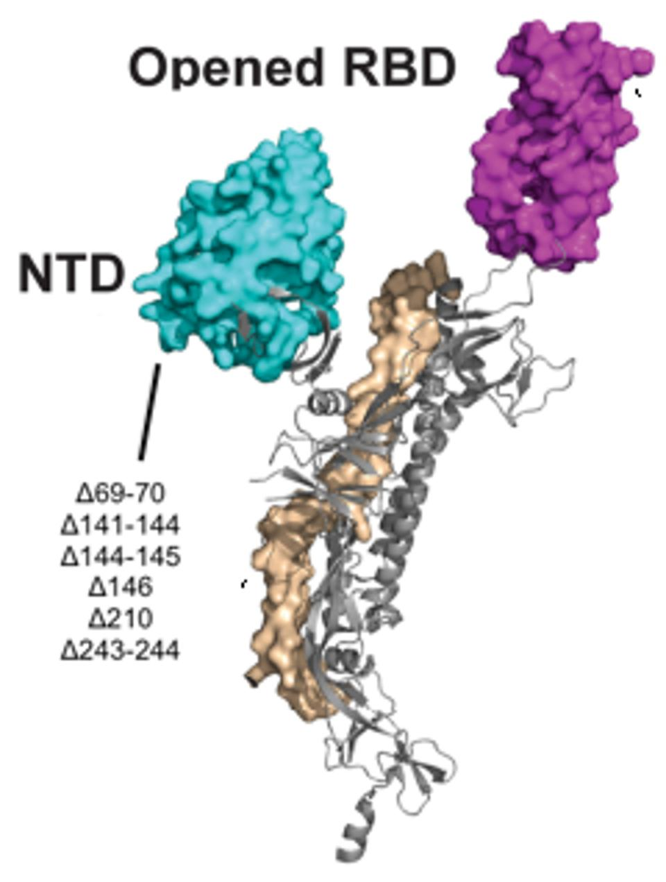 Figure 5. A 3D visualization of the N-terminal domain with notation of the Pittsburgh patient mutations.