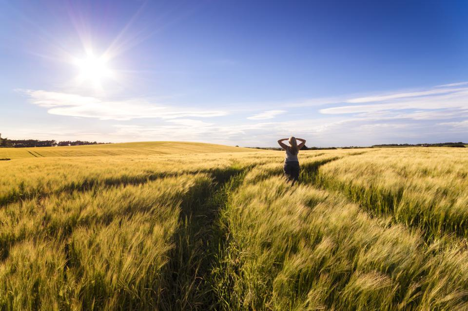 Back view of woman standing in grain field at sunset