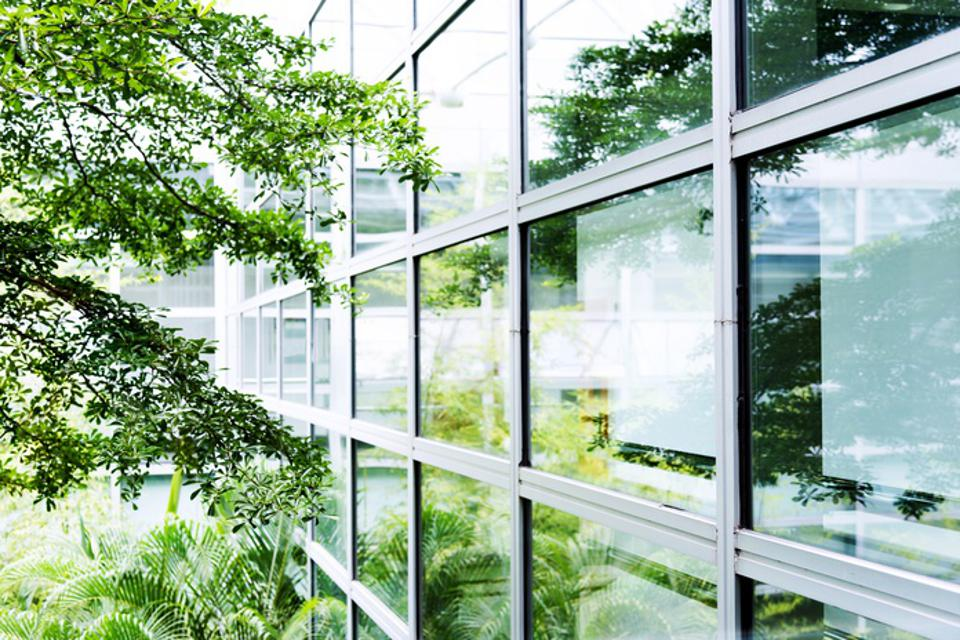 Modern office with tree