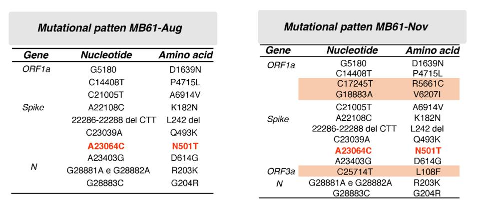 Table 1. Mutational pattern of the two isolates MB61-Aug and MB61-Nov, which were obtained from the same patient 4 months apart.