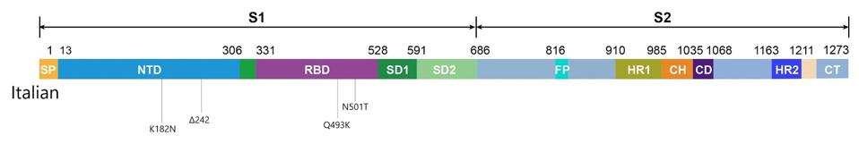 Figure 1. Linear visual representation of spike protein in viral genomes from the Italian patient.