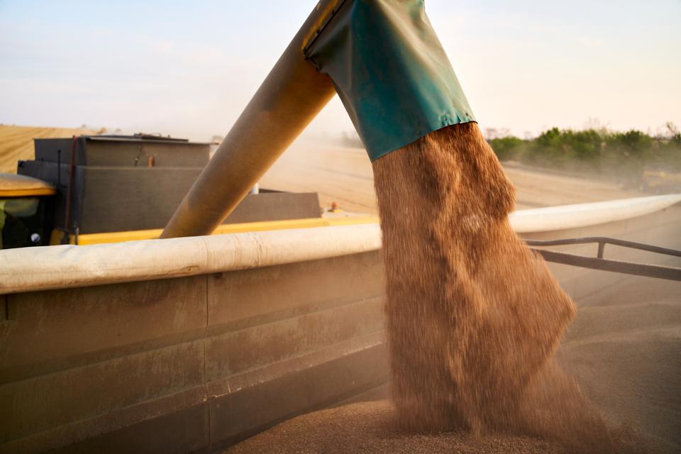 Combine loading grain into a grain truck.