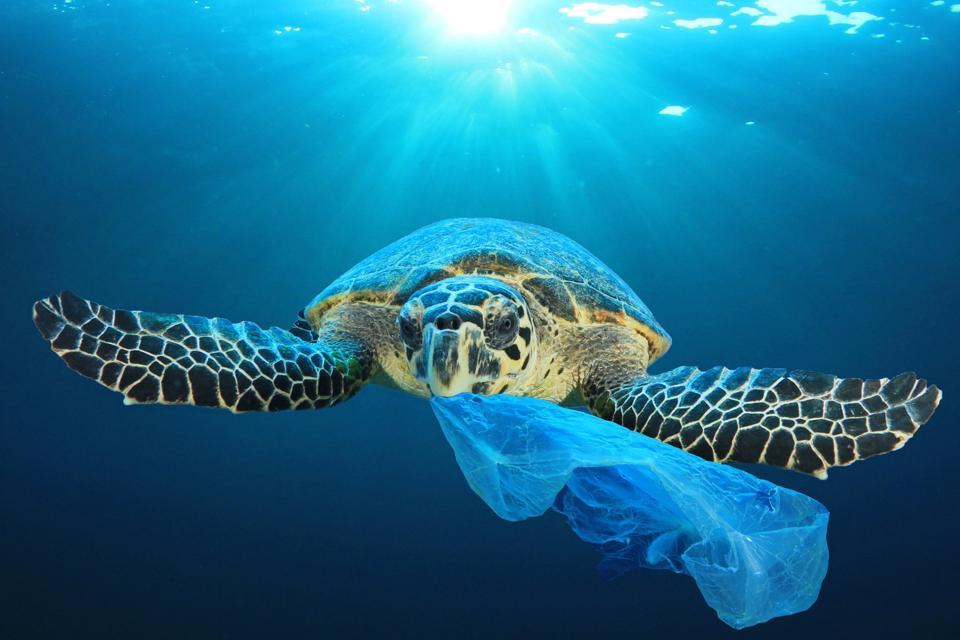 Sea Turtle and plastic polution